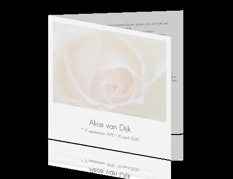 Stijlvolle Rouwkaart Met Roze Witte Roos En Grijze Tekst
